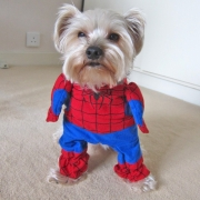 Pet by Superhero Costume Spiderman
