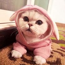 Leuke Hoodie voor Huisdieren met Effen Kleur Konijnenoren en Capuchon