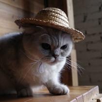 Moderne Strohoed voor Huisdieren met Brede Rand