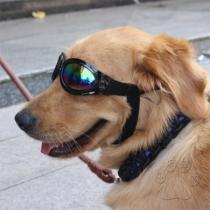Moderne Zonnebril voor Huisdieren met Rond Frame